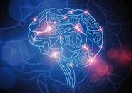 Мозок на 73% складається з води, яка необхідна для виробництва гормонів і нейротрансмітерів.